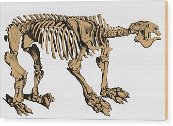 Megatherium, Extinct Ground Sloth Wood Print by Science Source