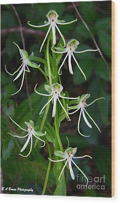 Michaux Orchid Wood Print by Barbara Bowen
