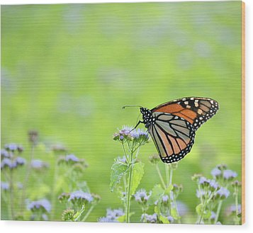 Monarch And Mist Wood Print by JD Grimes