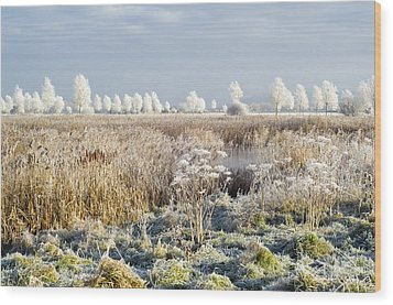 Morning Frost Wood Print by Duncan Shaw