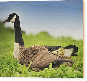 Mother Goose And The Loud One Wood Print by Vicki Jauron