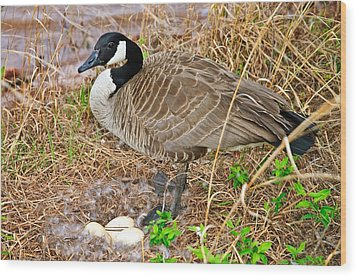 Mother Goose At Nest Wood Print by Susan Leggett
