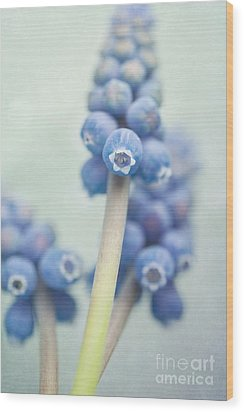 Muscari Wood Print by Priska Wettstein