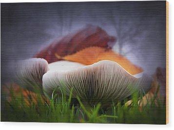 Mushrooms Close Up Wood Print by Svetlana Sewell