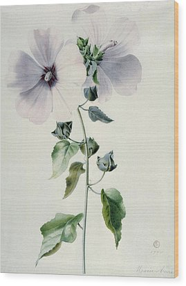 Musk Mallow Wood Print by Marie-Anne