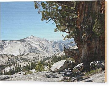 Old Tree At Yosemite National Park Wood Print by Mmm