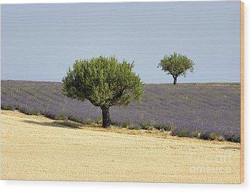 Olives Tree In Provence Wood Print by Bernard Jaubert