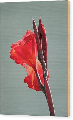 On Fire Wood Print by Suzanne Gaff