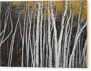 On The Edge Wood Print by The Forests Edge Photography - Diane Sandoval