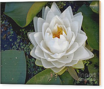 Optical Illusion In A Waterlily Wood Print by Kaye Menner