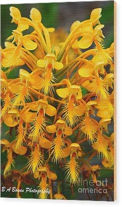Orange Fringed Orchis Wood Print by Barbara Bowen