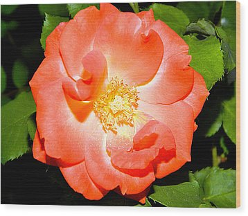 Orange Rose  Wood Print by Ester  Rogers