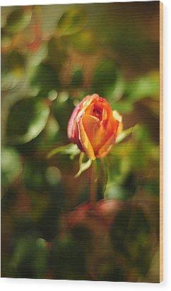 Orange Rosebud Wood Print by Rebecca Sherman
