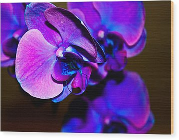 Orchid #2 Wood Print by David Alexander