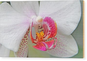 Orchids 10 Wood Print by Becky Lodes