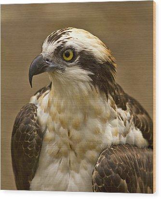Osprey Portrait Wood Print by Anne Rodkin