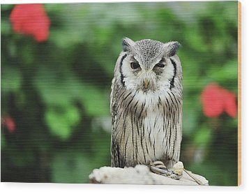 Owl With Blurred Background Wood Print by Copyrights(c) All rights reserved by Haruhisa Yamaguchi