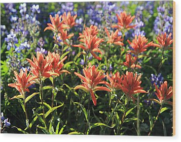 Paintbrushes Wildflowers Rainier National Park Wood Print by Pierre Leclerc Photography