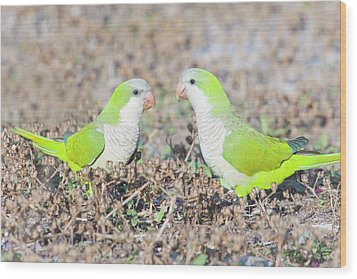 Parakeet Wood Print by Alex Bramwell