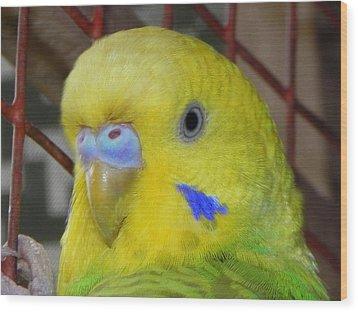 Parakeet Inside Cage Wood Print by Arindam Raha