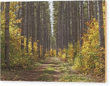 Path Into The Forest In Autumn Sault Wood Print by Susan Dykstra