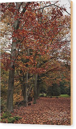 Path Of Leaves Wood Print by John Rizzuto