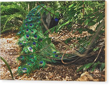 Peacock Hiding Wood Print by Kaye Menner