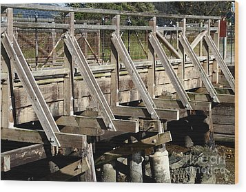 Pedestrian Bridge At Point Isabel In Richmond California . 7d15082 Wood Print by Wingsdomain Art and Photography