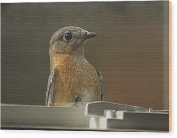 Peeping Bluebird Wood Print by Kathy Clark
