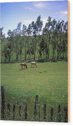 Petaluma Pasture Wood Print by Kathy Yates