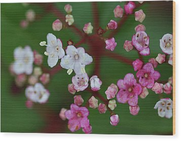 Pink And White Flowers Wood Print by Picture By La-ong