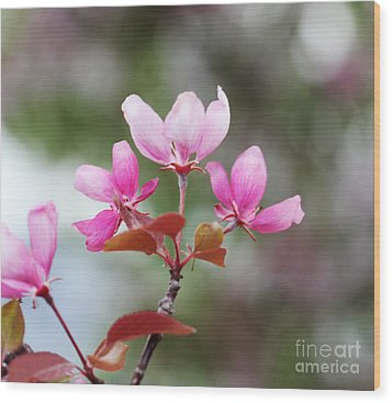 Pink Apple Blossom 2 Wood Print by Donna Munro