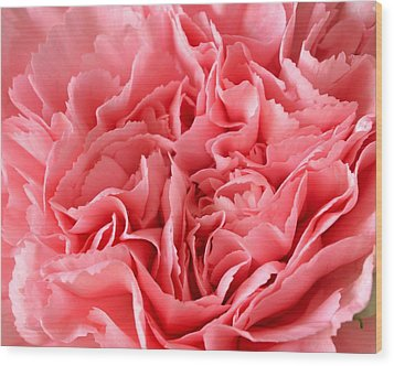 Pink Carnation Wood Print by JD Grimes