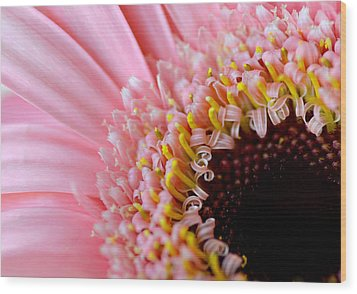 Pink Celebration Wood Print by Julie Palencia