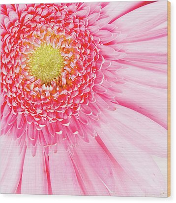 Pink Delight II Wood Print by Tamyra Ayles