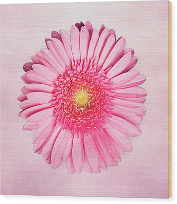 Pink Delight Wood Print by Tamyra Ayles