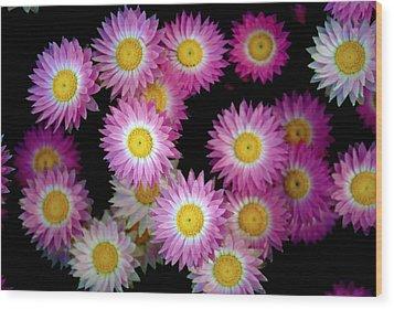 Pink Flowers At Dawn 3 Wood Print by Sumit Mehndiratta