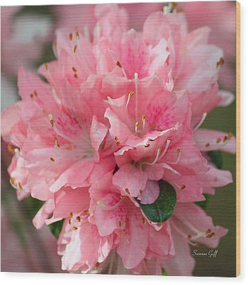 Pink On Pink Squared Wood Print by Suzanne Gaff