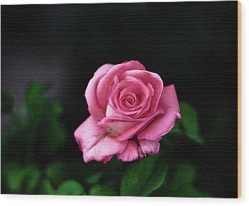 Pink Rose Wood Print by Annfrau