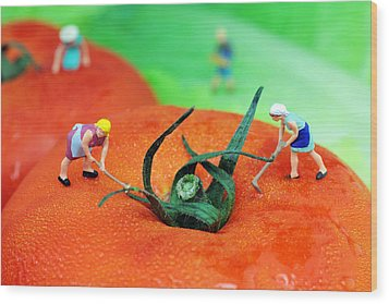Planting On Tomato Field Wood Print by Paul Ge