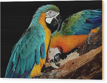 Poly Wants A Cracker Wood Print by Paulette Thomas