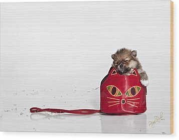 Pomeranian 2 Wood Print by Everet Regal