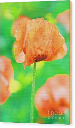 Poppy Flowers In May Wood Print by Anita Antonia Nowack