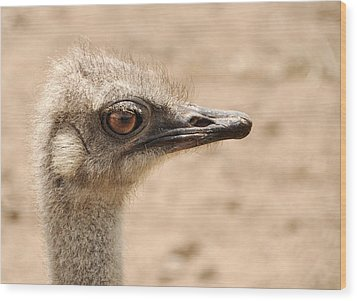 Portrait Of An  Ostrich Wood Print by Laura Melis