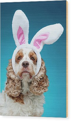 Portrait Of Dog Wearing Easter Bunny Ears Wood Print by Jade Brookbank