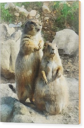Prairie Dog Formal Portrait Wood Print by Susan Savad