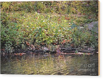Quiet Moment Wood Print by Maria Urso