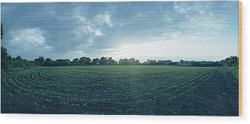 Raf Winkton Cornfield Wood Print by Jan W Faul