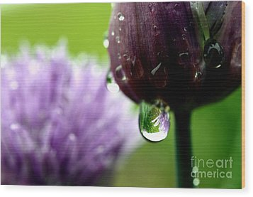 Raindrops On Chives In Bloom Wood Print by Thomas R Fletcher