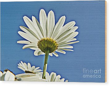 Reach For The Blue Sky Wood Print by Darleen Stry